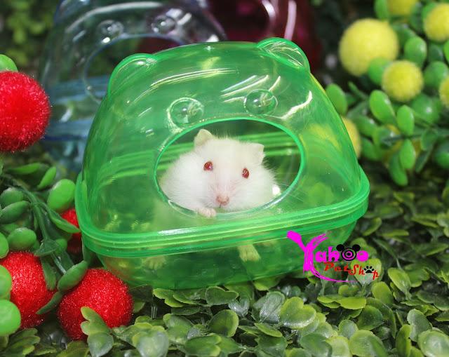 nha tam chuot hamster
