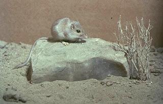 """""""Animales del desierto-3"""""""