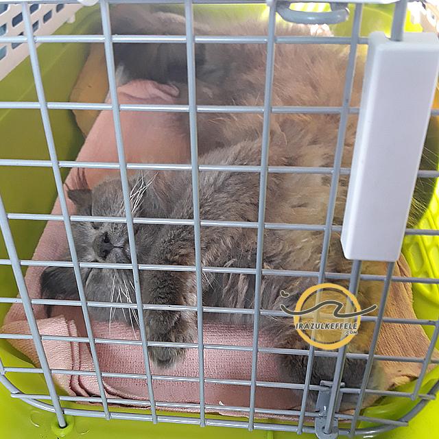 pengalaman bawa kucing balik kampung