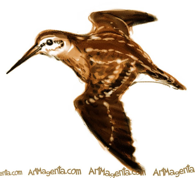 Jack Snipe sketch painting. Bird art drawing by illustrator Artmagenta.