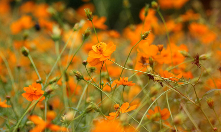 Beautiful Autumn Garden Flowers ~ a special flowers