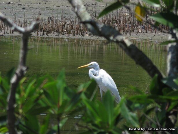 Kota-kinabalu-wetlands