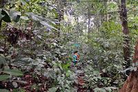 Hutan Desa di Dusun Manjau