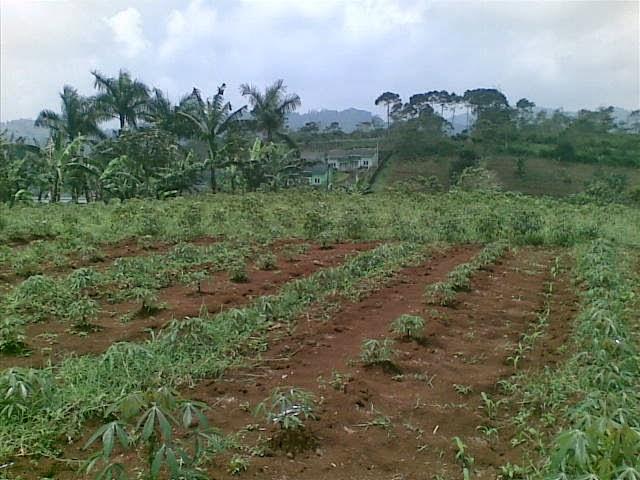 Foto(5228) Jual Tanah luas 25 Ha, Lokasi Cipanas-sukaresmi Jual tanah di cipanas jual tanah di puncak jual tanah di taman bunga nusantara