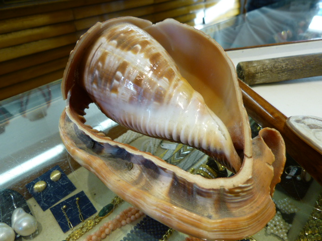 shell used for cameos