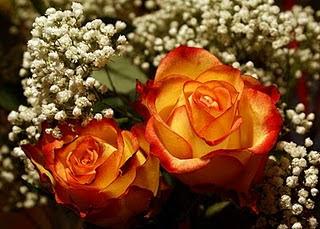 Mawar%2BKuning%2Bdengan%2Bstrips%2BMerah  7 Arti Warna Pada Bunga Mawar