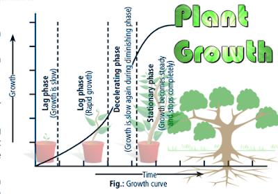 CBSE Class 11 - Biology - Understanding Plant Growth (#cbsenotes)(#eduvictors)