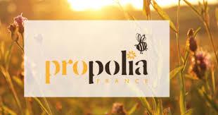le monde de prisca bio shampoing abeilles propolis