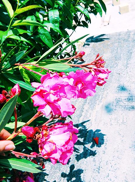 hills  ,himalayan flower