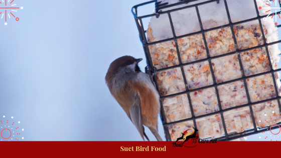 While numerous birders like to stay away from suet since it will soften in a hotter climate, it is sublime winter sustenance.