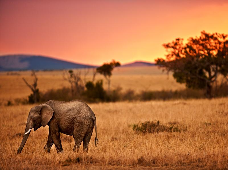 Human impacts on the savanna