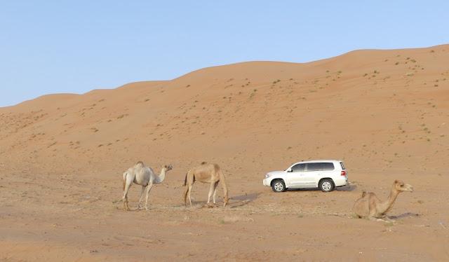 Wahiba Sands, Oman - Fortbewegungsmittel