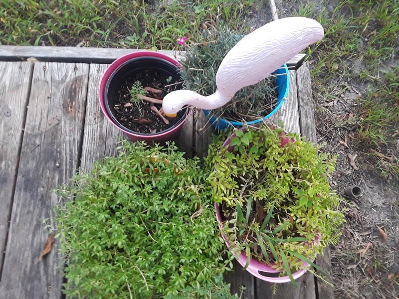 Plantes et flamand rose