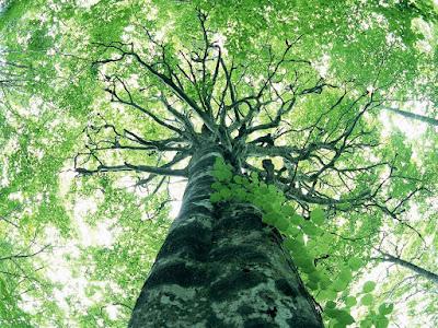 Judaísmo e meio Ambiente