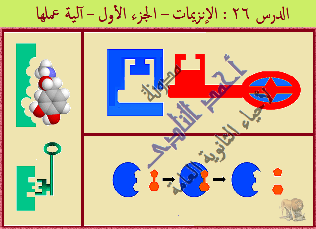 الإنزيمات – أحياء الثانوية العامة – مدونة  أحمد النادى