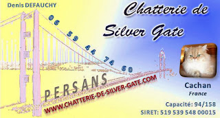 http://www.chatterie-de-silver-gate.com/index.html