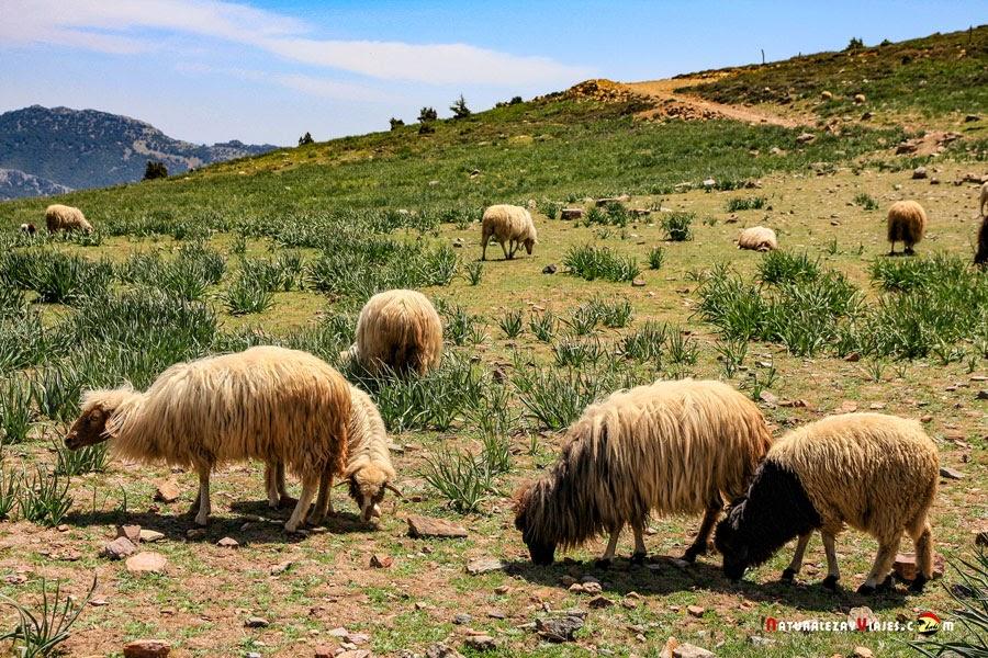 Parque Nacional Jbel Tazeka