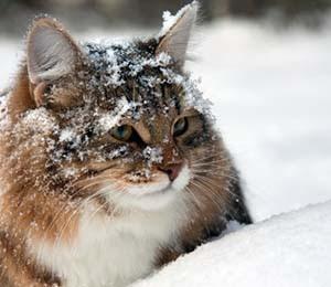 Mačka u snegu - Panvet blog