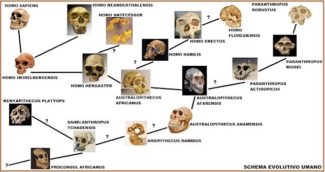 Risultati immagini per evoluzione umana