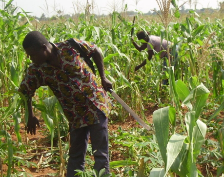 togolese farm workers flee nigeria