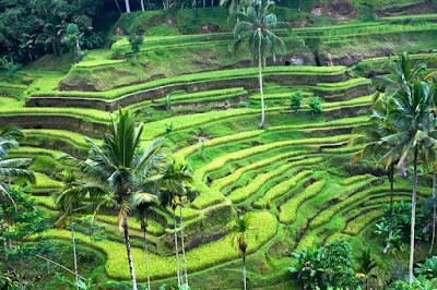 Mau Berwisata di Bali? Inilah 4 Tempat yang Wajib Dikunjungi!