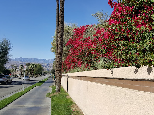 Beautiful Colours in Palm Springs Desert Urban Nature