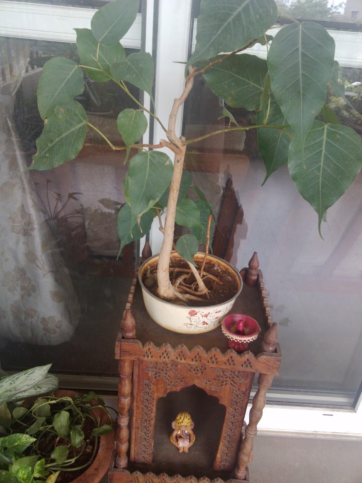 SAJAVAT Of Flowers Succulents Amp A Bonsai