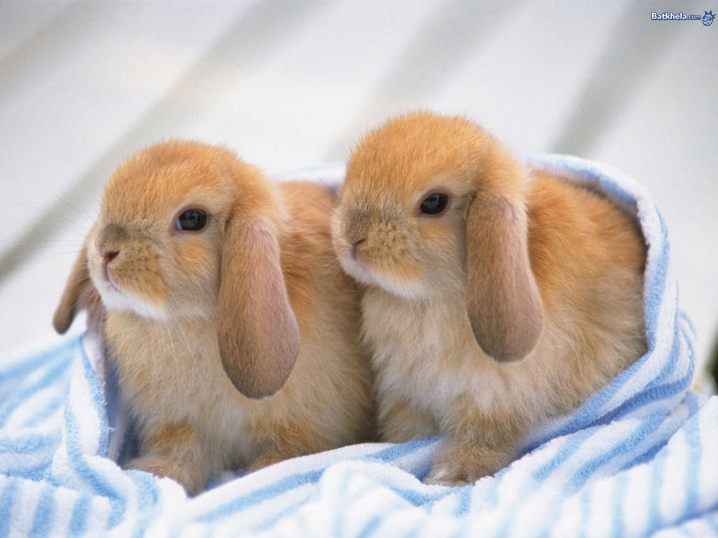 Funny Pictures Gallery Pictures Of Baby Animals Cute Pictures Of Baby Animals Picture Of Baby