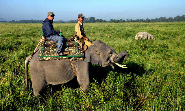 Kaziranga National Park – a world heritage site, the park hosts two-thirds of the world's Great One-horned rhinoceros.