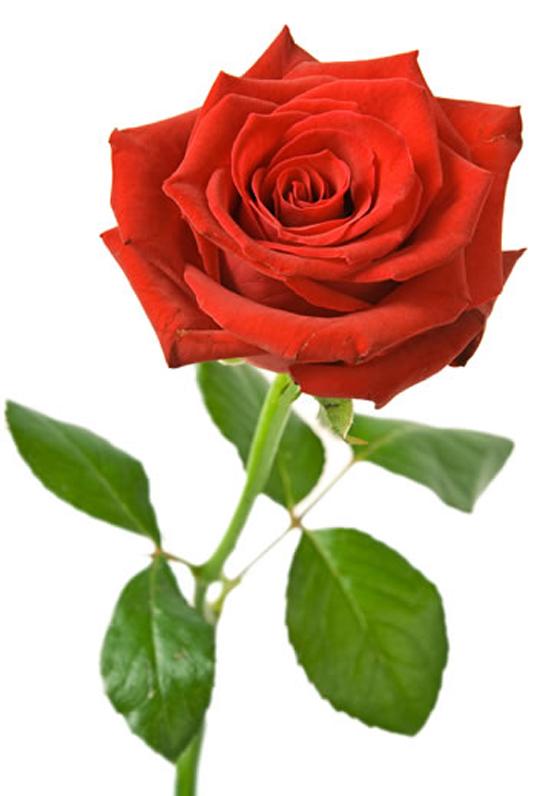 3d Love Red Heart Wallpaper Single Rose Wallpapers Walls Hub