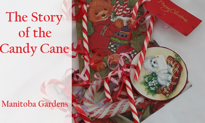 Manitoba gardens the story of the candy cane