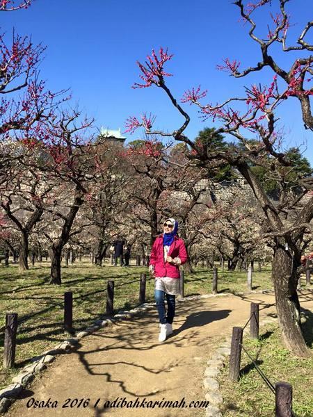 cantik bunga sakura