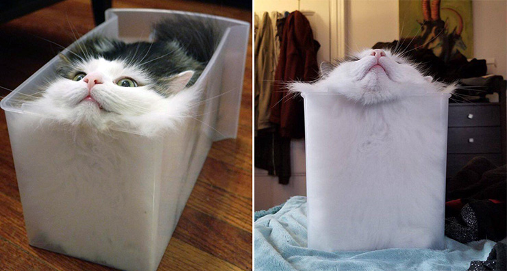 Are Cats Solids or Liquids?