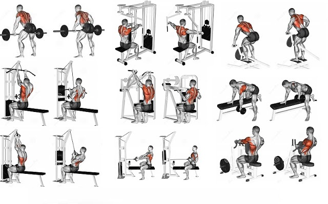 Image result for Back exercises