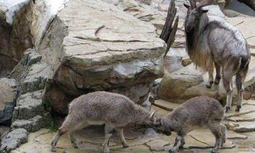 Pakistán enfrenta una servera sequía que afecta especies