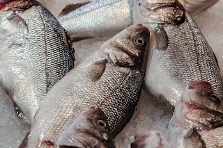 Ikan Laut - Makanan Yang Berbahaya Bagi Ibu Hamil