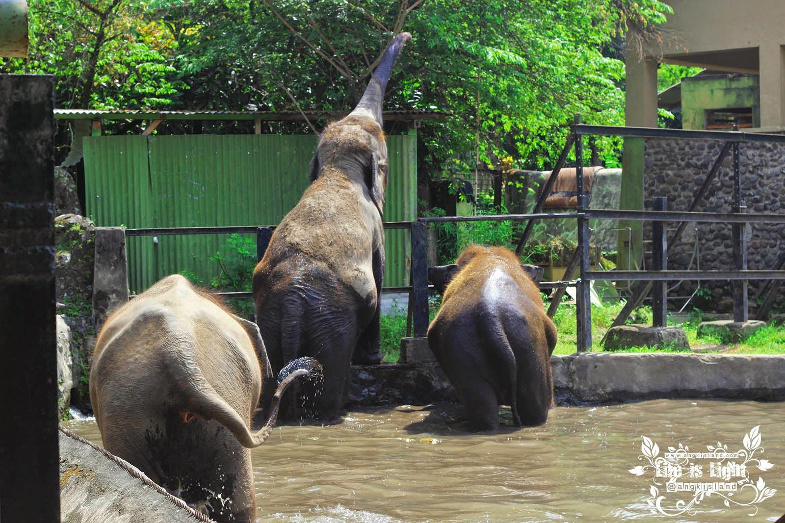 gajahnya Gembiraloka