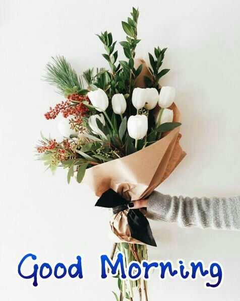 good morning,good morning wishes,good morning photos,good morning sms,good morning pictures for whatsapp,good morning quotes,good morning video,good morning images,good morning wallpaper,good morning video whatsapp,whatsapp good morning video,good morning whatsapp video,motivational good morning video,good morning quote,good morning greetings,best good morning images,good morning song