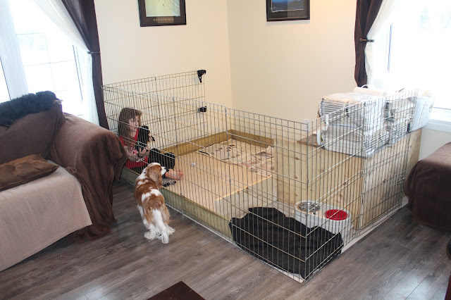 Whelping box and divided puppy play area