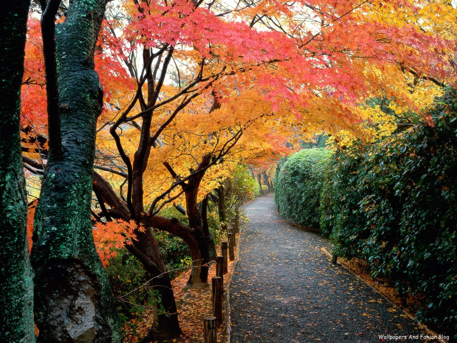 Fall Road Wallpaper Tops Wallpapers Around The World Natural Background