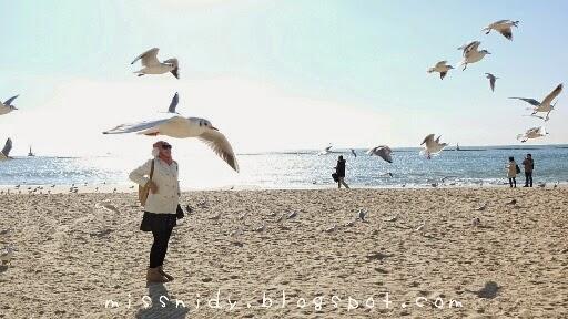 cara menuju haeundae beach busan