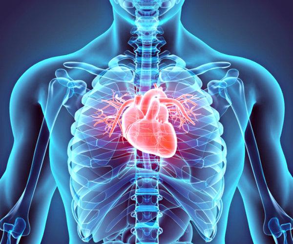 Tanaman Obat Penyakit Jantung