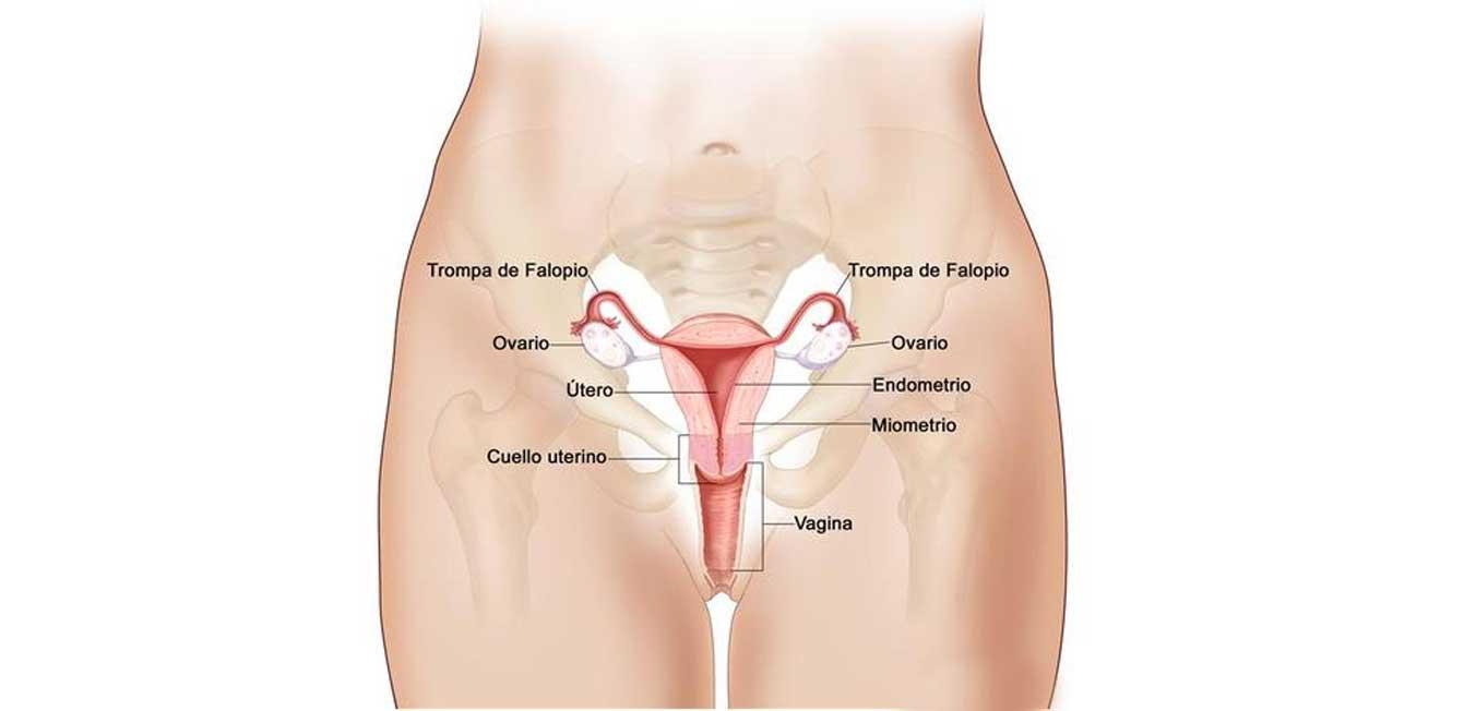 Investigan el origen del orgasmo femenino | Uronoticias