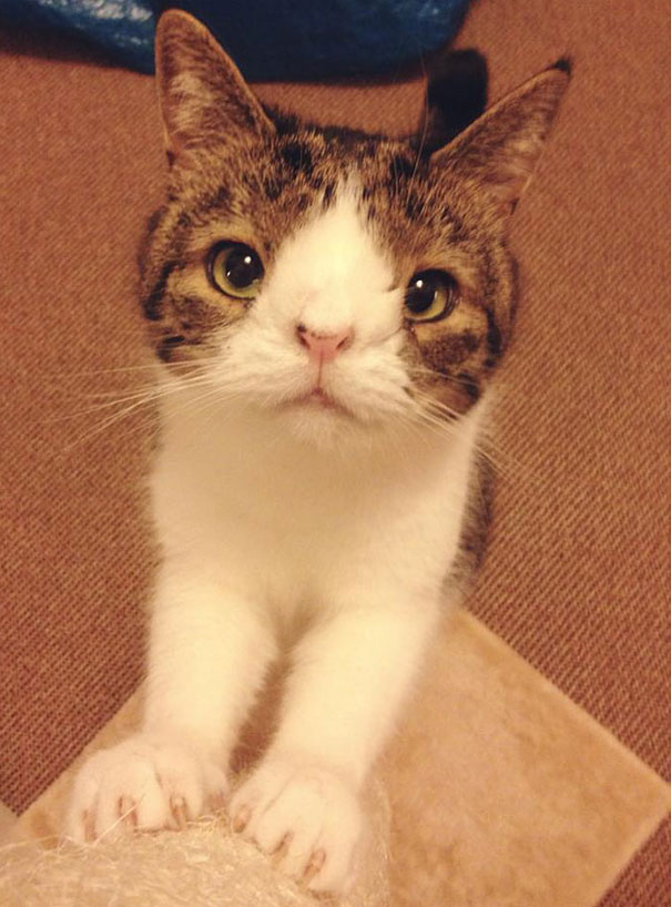 Monty the Cat Who Was Born Without A Nasal Bridge-1