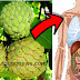 10 Remarkable Health Benefits Of Eating ATIS (Sugar Apples)