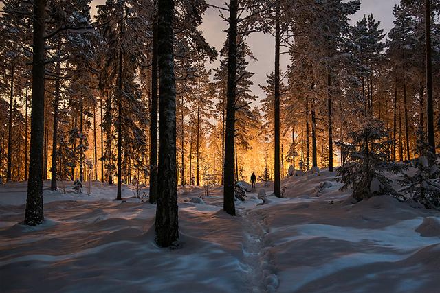 Finlandiya ormanda gizemli ışık