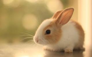 دراسة جدوى مشروع تربية الأرانب بالبطاريات