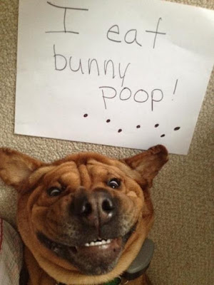 Funny Dog Shaming : I eat anything