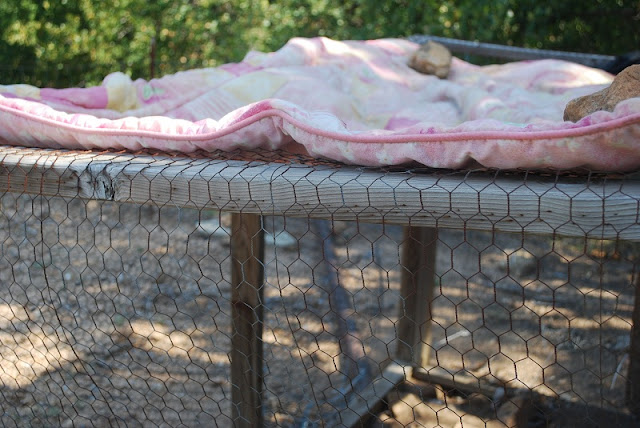 Provide shade for the hens by adding a tarp over their outside run.