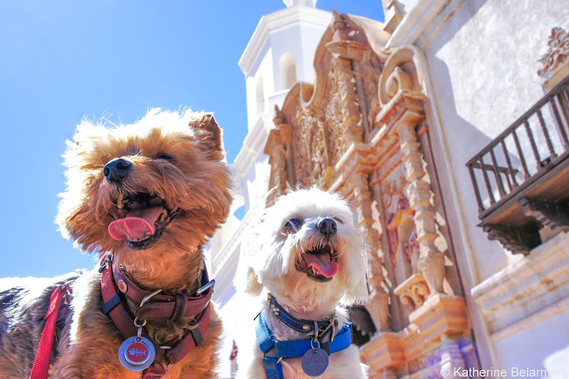 Henry and Charlie at Mission San Xavier del Bac Pet-Friendly Vacations Tips for Traveling with Dogs